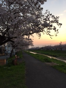 佐奈川 桜